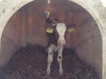 vizita la fermele napolact - 7