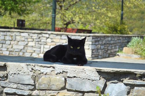 animale de companie - pisica