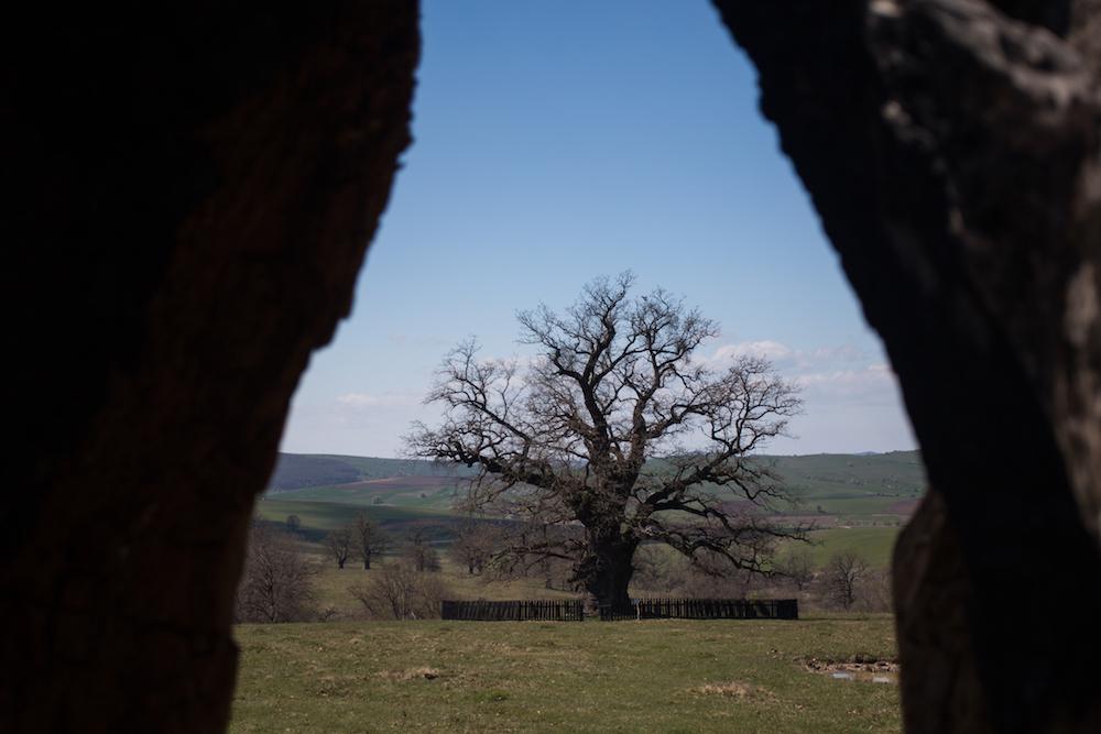carpaterra-7 - poveste despre batranul carpatilor